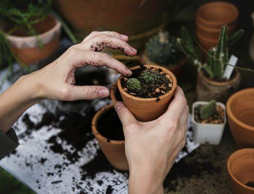 Conceptos básicos para jardinería en una comunidad: geobotánica, biodiversidad, edafología y ecosistema
