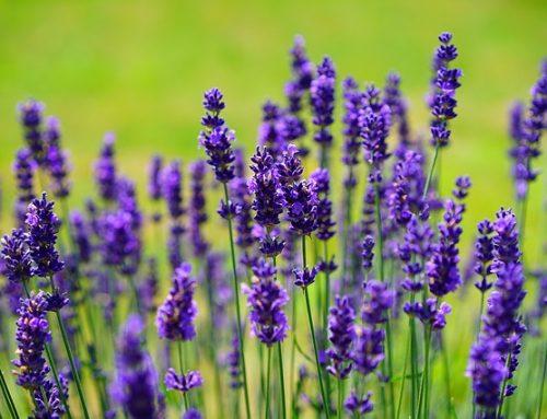 Secretos de la transición del jardín convencional al jardín ecológico. Descúbrelos ahora