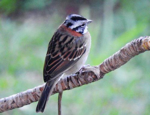 Esta fauna denota la calidad ambiental de tu jardín