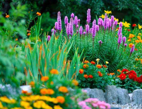 Cómo prevenir plagas en el jardín